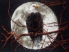 Орел в лунном свете